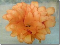 春色のテーブル花が出来上がりました!!